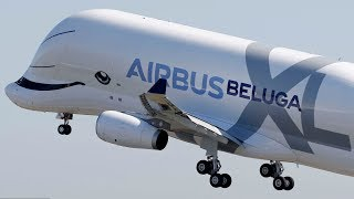 Whale done: Airbus Beluga XL soars into skies above France for first flight