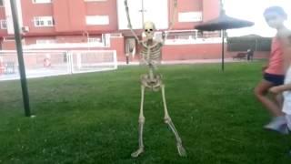 El disco esqueleto