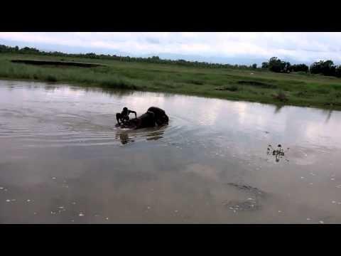 The bath of the elephant…