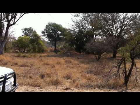 Kruger National Park 2011
