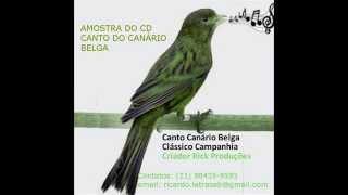 Amostra Cd Canto Canário Belga Campanhia