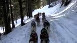 Abschlußfahrt mit 18 Hunden - Annaberg 2009