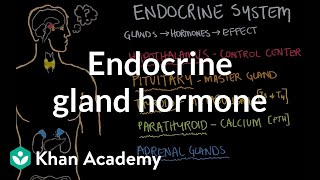 Endocrine gland hormone review   Endocrine system physiology   NCLEX-RN   Khan Academy