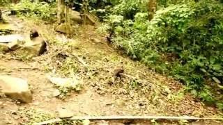 Vida selvagem - Florianópolis - SC