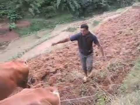 Plugging field in Dhobi Khola, Kalati Bhumidanda V.D.C., Kavre District, Nepal