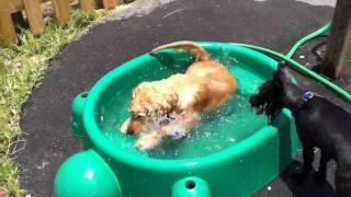 Huck Swimming in a Kiddie Pool