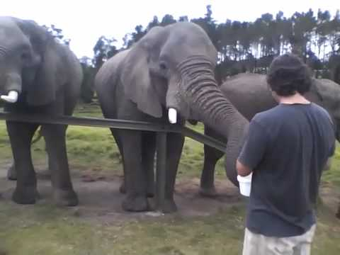 Feeding the Ellies!.m4v