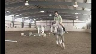 Horse Gaits : Right Foot Lead Cantering From a Sitting Trot