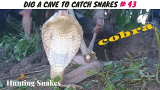 DIG A CAVE TO CATCH SNAKES EPISODE 43: THE HUNT FOR COBRA ATTACKED THE CHICKS