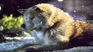 Instrumental Music: Jan A. P. Kaczmarek - Goodbye (Hachiko: A Dog's Story OST)