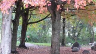 Autumn Pantoum.wmv