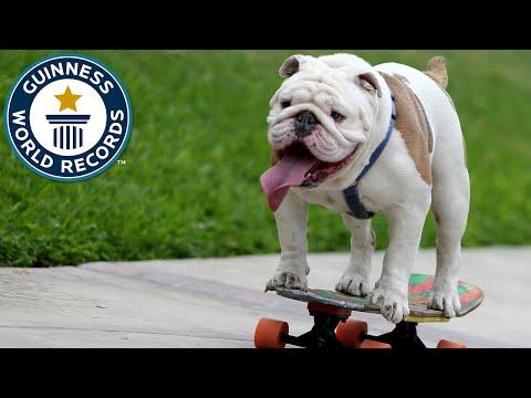 hund p skateboard s tter v rldsrekord skejtar genom m nsklig tunnel feber video. Black Bedroom Furniture Sets. Home Design Ideas
