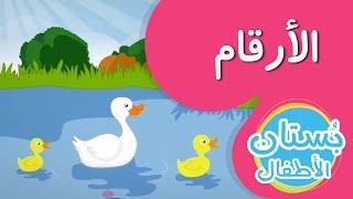 تعلم العد مع البط - فيديو تعليمي للأطفال