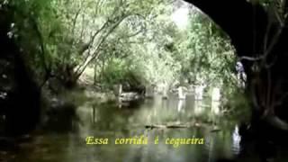 Ricardo Ribeiro _ Agua Louca da Ribeira.wmv