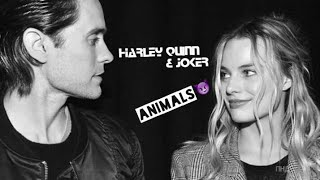 Harley Quinn & Joker - animals