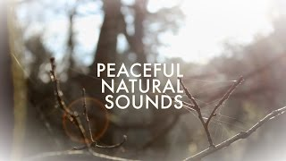 Peaceful Natural Sounds: Official Trailer