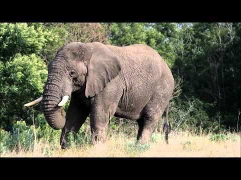 On Safari at Kichaka Game Lodge, Grahamstown, South Africa