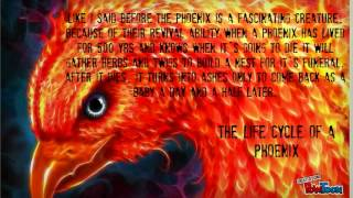 The fire of the phoenix
