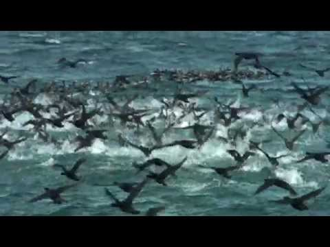 Whales and the marine life of Walker Bay- Hermanus. South Africa