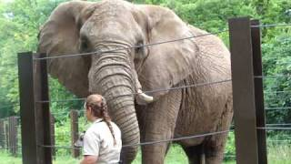 African elephant demonstrating their rumble