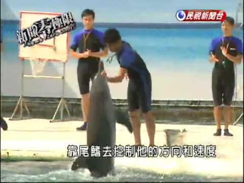海豚的語言  靠發聲及回聲定位-民視新聞 - YouTube