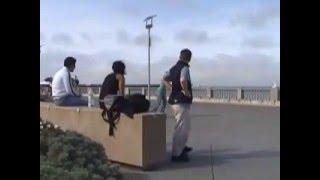 Freeline Skates -- MakMak