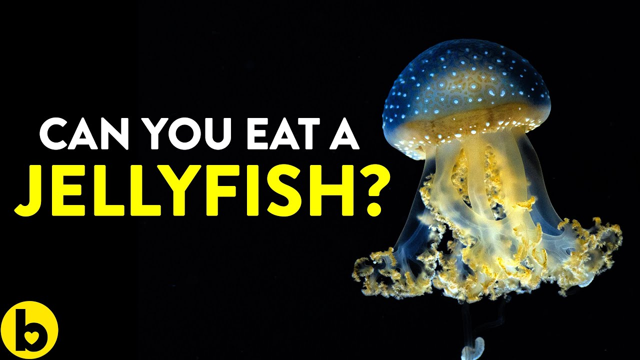 This is why you should Eat Jellyfish