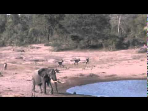 Thembe Elephant Reserve – South Africa Travel Channel 24