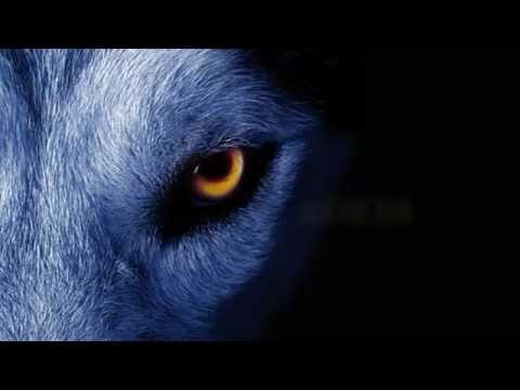 sia she wolf