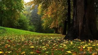 🎧  Meditação - Música Para Elevação Espiritual - Slainte - The Manx Lullaby