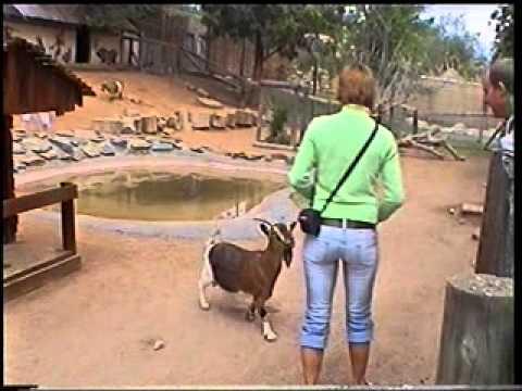 peta kozy south africa
