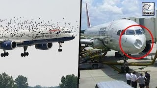 British Airways Airplane Crashed Into A Flock Of Strange Birds | Birds vs Planes  | Lehren News