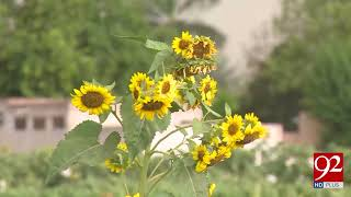 Govt failed to provide Rs 5000/acre subsidy on Sunflower and canola cultivation | 2 May 2018