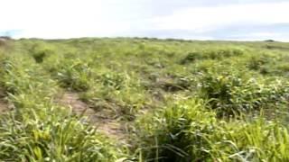 Projeto ajuda produtores a enfrentar dificuldades com o solo