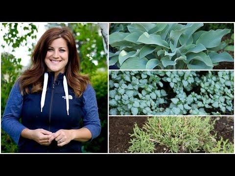 Dividing Perennials