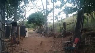 Veja o Grito da mulher no Tombo da Arvore, Ouro Preto Do Oeste Rondônia Brasil