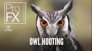 Owl hooting sound effect   ProFX Sound, Sound Effects, Free Sound Effects JOvcHXdQhaQ