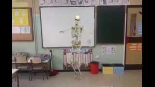 Esqueleto bailarin