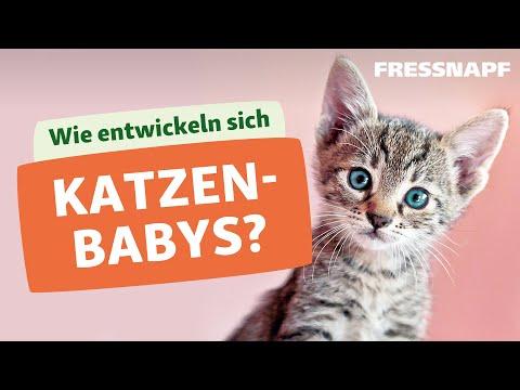 Die Entwicklung von Katzenbabys / Kitten