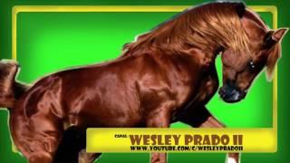 efeito sonoro de cavalo andando - Sound effect of walking horse