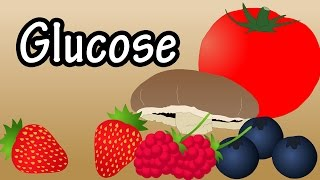 Glucose - What Is Glucose?