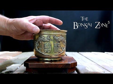 Styling a Little Spirit Cedar Tree, Part 2, The Bonsai Zone, June 2018