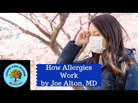 How do Allergies and Allergic Reactions Work?