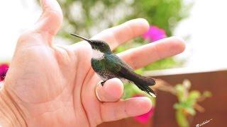 Beija Flor que trouxe meu amor... Simpático Beija flor vindo na mão.