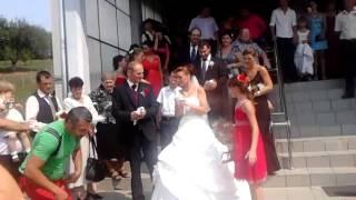 porumbei albi nunta reghin