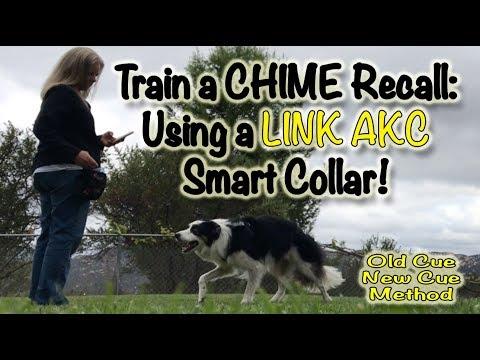 LINK AKC: Train a Chime Recall