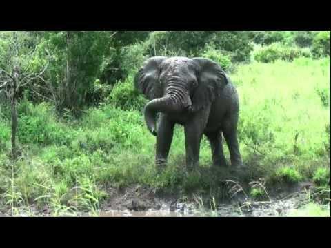 Safari in the Hluhluwe-Umfolozi Park  (South Africa)