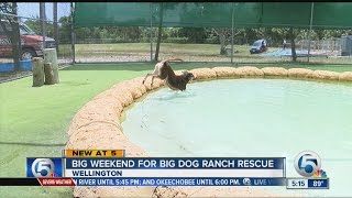 Big weekend for Big Dog Ranch Rescue
