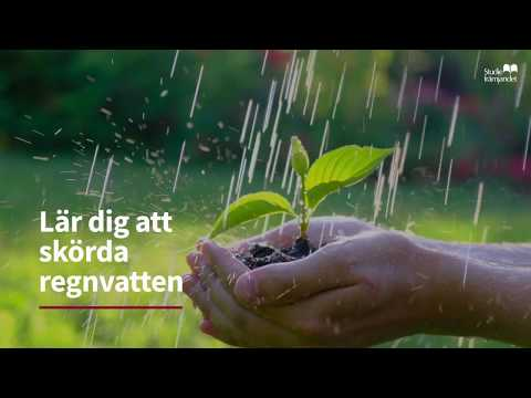 Skörda regnvatten