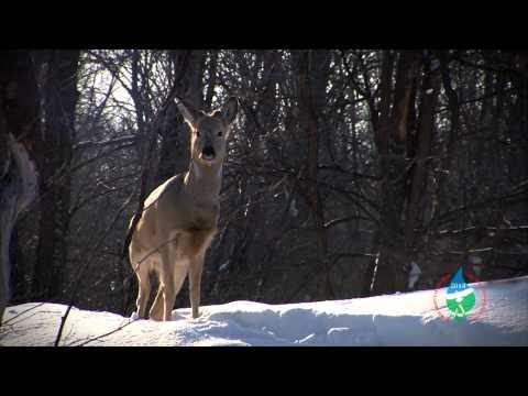 Охрана животных от браконьеров в Республике Башкортостан